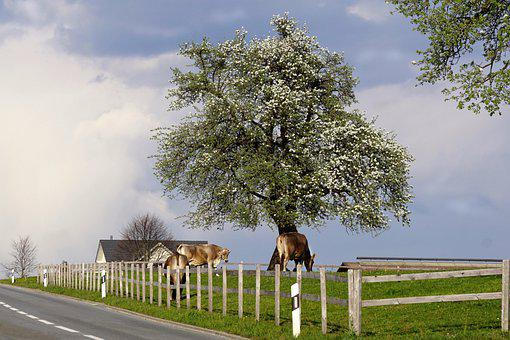 Spring, Landscape, Agriculture, Sky, Clouds, Weather