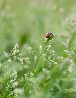 Small, Ladybug, Red, Herbs, Crazy, Green