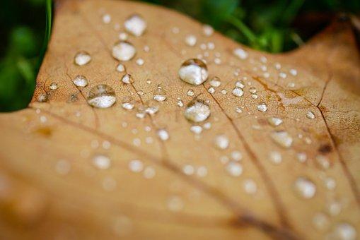 Dew, Drip, Autumn, Water, Nature, Rain, Leaf, Wet
