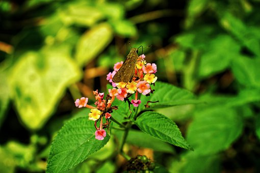 Natural, Green, Butterfly, Trees, Forest, Leaf, Flower