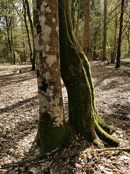 Ash, Oak, Forest, Para, Romance, Tree