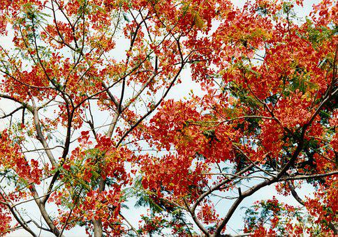 Landscape, Bangladesh, The Fiery Flowers, Travel