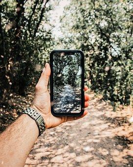 Phone, Effect, Forest, Nature, Landscape, Tree, Sun