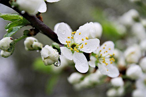 After The Rain, Spring, Morning Flowers