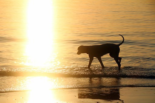 Dog In The Water, Dog By The Sea, Doggy Style, Sunset