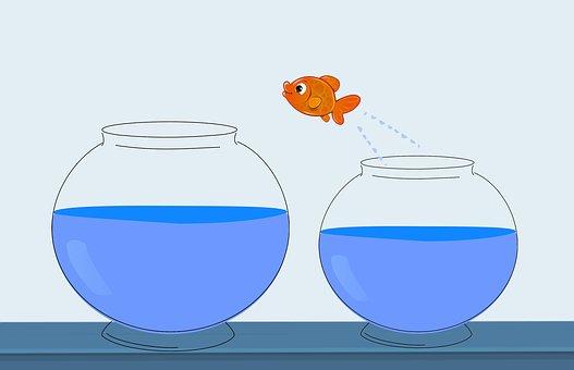 Fish, Jump, Change, Career, Concept, Challenge, Chance