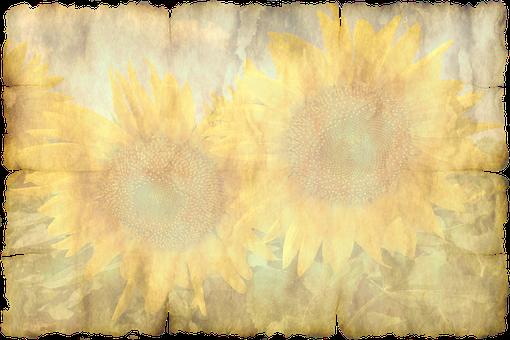 Parchment, Paper, Leaves, Sun Flower Old
