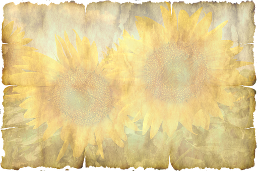 Parchment, Paper, Leaves, Sun Flower Old, Texture