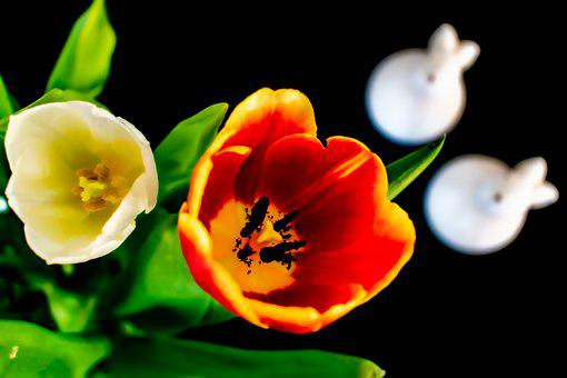 Easter, Tulips, Easter Bunny, Surreal