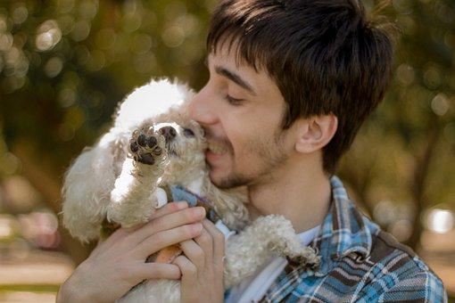Boy, Dog, Poddle, Happy, People, Animal, Love, Man