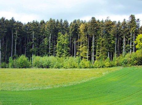 Erdőszél, Trees, Sowing, Spring Awakening, Clouds
