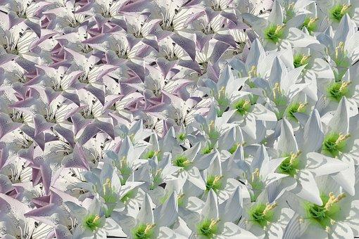 Blossom, Pattern, Swank, Colorful, Gray Pattern