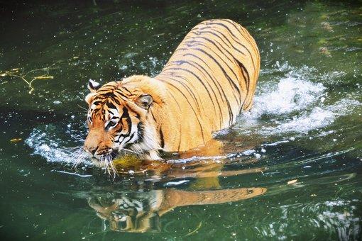 Beast, Animal, Mammal, Zoo, Animals, Cat, Deer