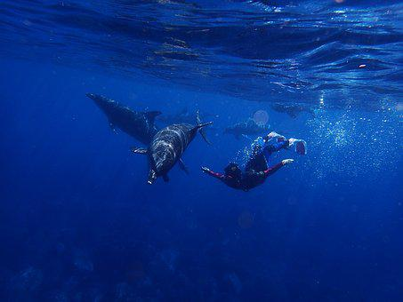Sea, Dolphin, Blue, In Water, Diving, Animal, People