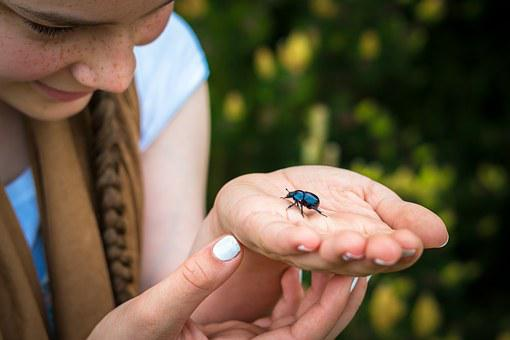 Beetle, Dung Beetle, Hand, Finger, Palm, Girl, Viewing