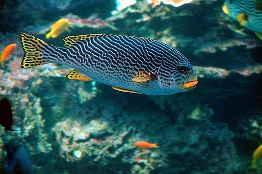 Tropical Fish, Colorful, Fish, Underwater, Aquarium