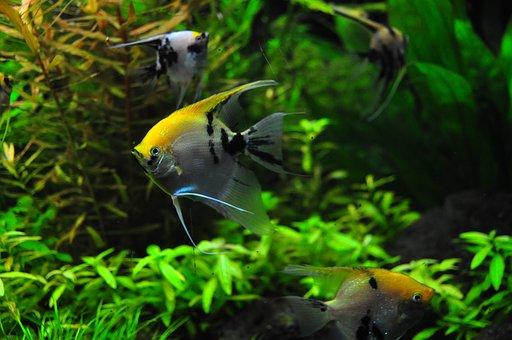 Fish, Tank, Aqua, Decorative, Zoo, World, Aquatic, Pet