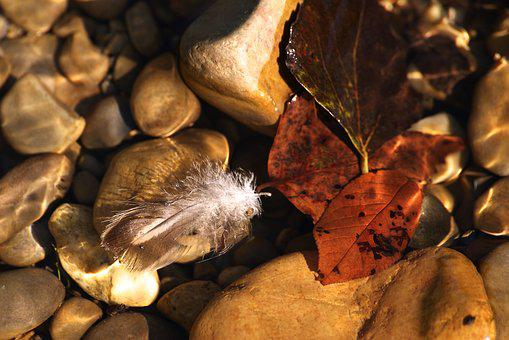 Feather, Leaves, Water, Floating, Swim, Mood