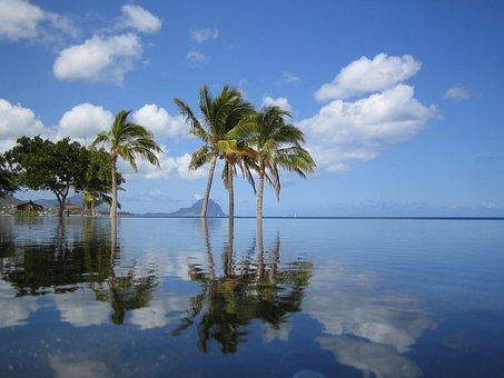 Mauritius, Pool, Palm Trees, Sea, Holiday, Summer