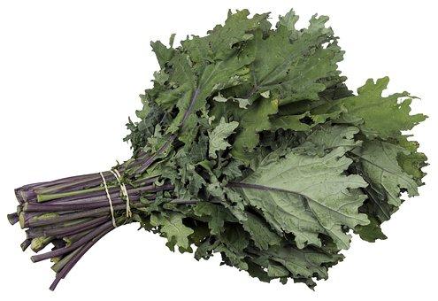 Boot Rhubarde, Organic Food, Polygonaceous Family
