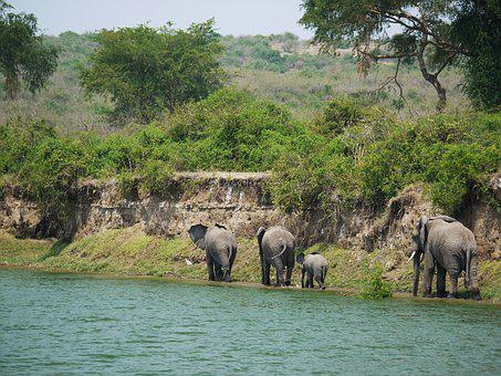 Elephant, Uganda, Bluff, Refreshment, Animals, Children