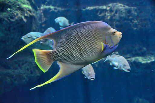Tropical Fish, Aquarium, Saltwater, Water, Underwater