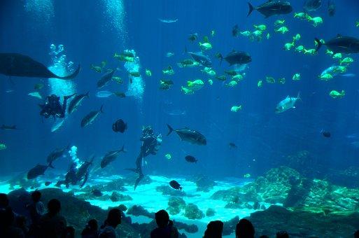 Salt Water, Aquarium, Diver, Scuba Diver