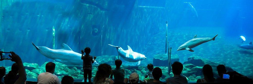 Aquarium, Dolphins, Underwater, Diving, Viewers, Sea