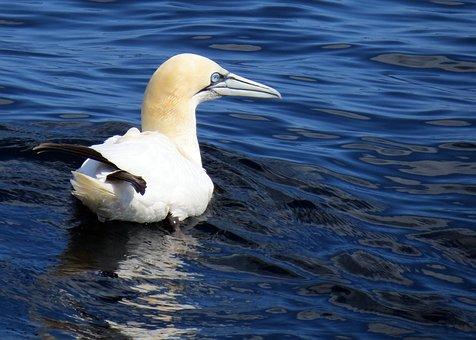 British, Wildlife, Nature, Bird, Feathers, Water