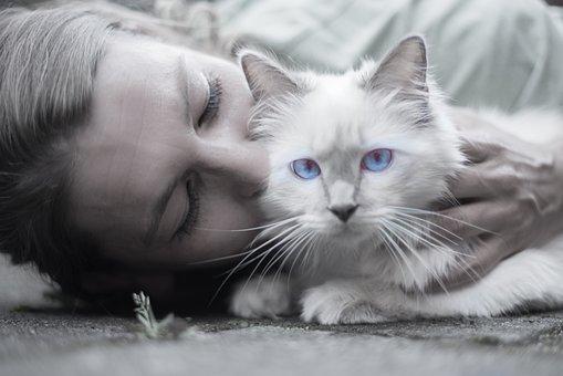Cat, Woman, Blue, Eyes, Portrait, Whiskers, Pet, Person