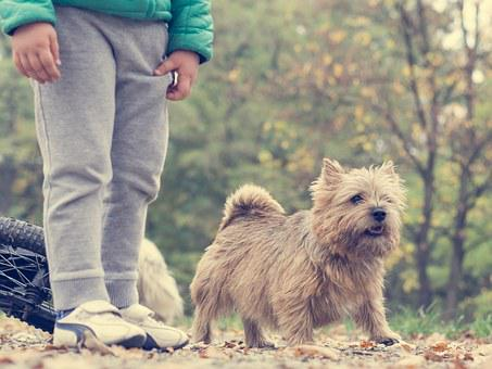 Dog, Boy, Autumn, Spacer, Park, Foliage, Tree, Young