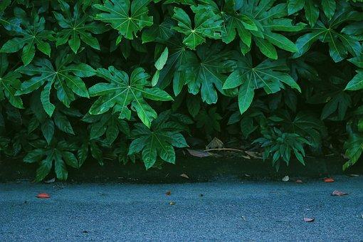 Green, Forest, Background, Leaf, Road, Along, Ground