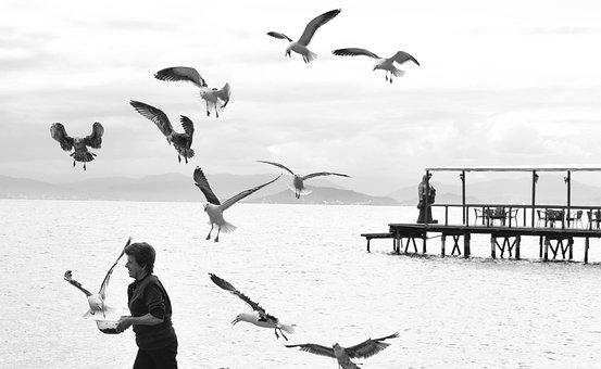 Santa Catarina, Brazil, Florianopolis, Bird, Holiday