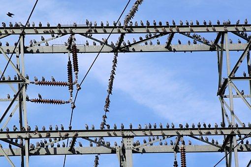 Star, Stare, Star Flight, Flock Of Birds