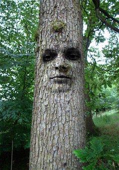 Tree, Man, Face, Abstract, Cool, Funny, Nature, Natural
