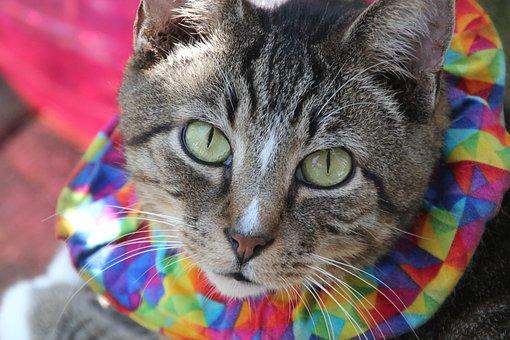 Cat, Feline, Henry, Pet, Rescue, Adoption