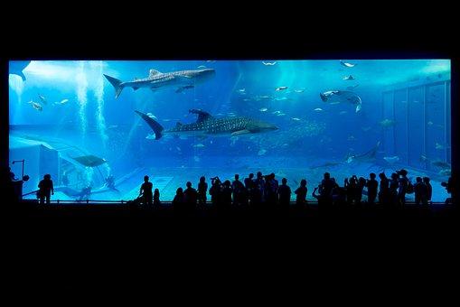 Aquarium, Shark, Okinawa, Japan, Fish, Water