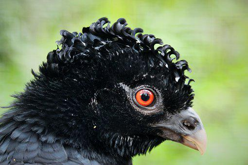 Rotschnabelhokko, Bird, Animal, Animal World, Plumage