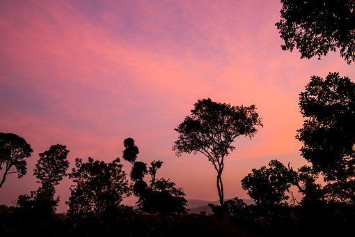 Sunset, Coorg, Karnatka, Pink, Coffee, Poetry, Birthday