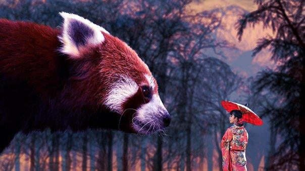 Fantasy, Photo Manipulation, Panda, Red Panda, Girl