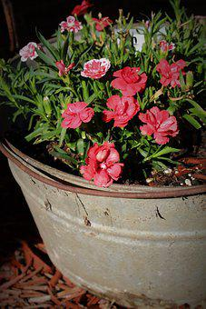 Flowers, Rustic, Bucket, Tin, Pink, White, Floral