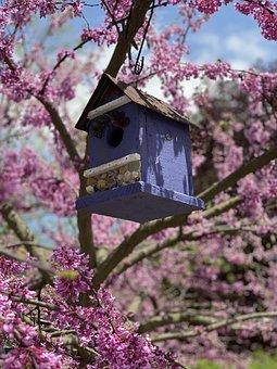 Bird, Birdhouse, Purple, Pink, Flowers, Sky, Floral