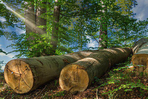 Tree Trunks, Sunshine, Sunbeam, Nature