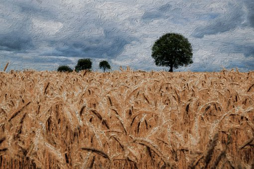 Oil Painting On Canvas, Wheat, Field