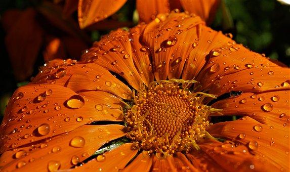 Blossom, Bloom, Orange, Background, Close Up, Petals
