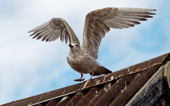 Seagull, Gull, Fly, Take, Off, Landing, Wing, Spread