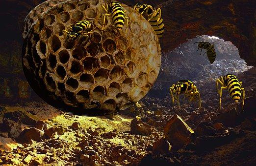 Underground, Yellow Jacket Nest, Hornet, Wildlife