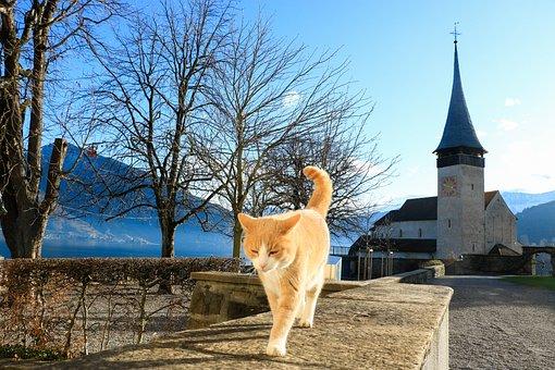 Switzerland, Spiez, Cat, Church, Landscape