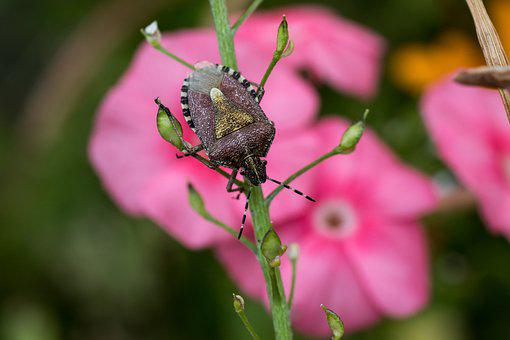 Leaf Bug, Insect, Bug, Close Up, Nature, Macro, Summer
