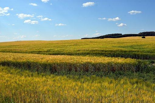 Field, Landscape, Nature, Sky, Village, Clouds